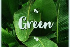 11A-green